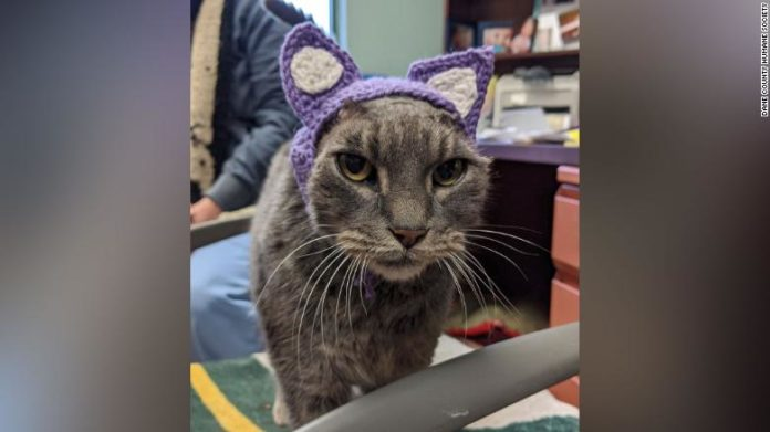 Old cat new ears