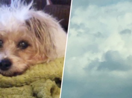 Dog's face in the clouds hours after death